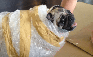 home removal - People who Pack Pets
