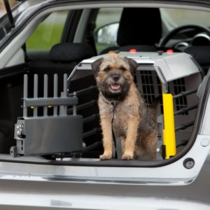 moving with your pet, moving with a dog, moving interstate tips